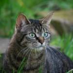 Katze, Fall der fuwft.de