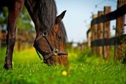 Fütterung beim Pferd