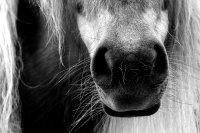 Homöopathie in der Pferdemedizin