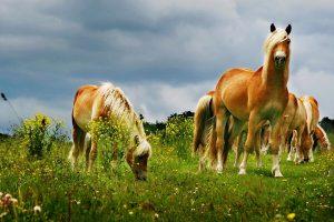 Halfilger_Fall von Dr. Ina Luz; FTA für Pferde