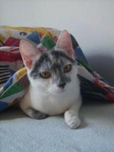 Homöopathie bei Katzen