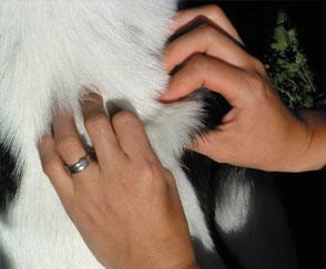 Physio für Kleintierpraktiker